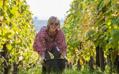 5 activities for an extraordinary seminar in the vineyards of Alsace