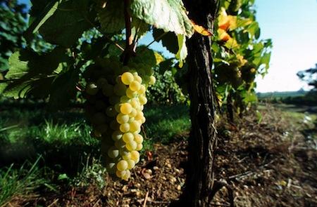 Déguster les vins d'Alsace : nos coups de cœur