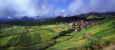 Les vins d'Alsace, une singulière richesse