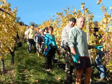 Destination l'Alsace pour une dégustation de vins exceptionnelle